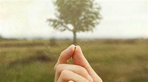 mustard seed tree copy Catholic Globe