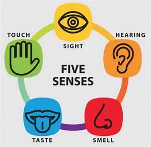 Chapter 9: Sensory Systems