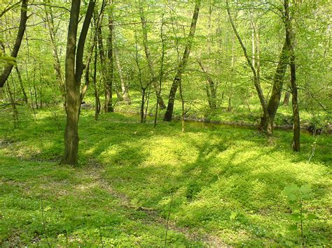 fileforest nature reserve grady nad moszczenica poland