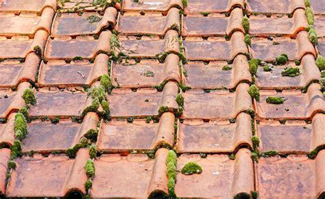 comment demousser toiture d 233 moussage et nettoyage de sa toiture pourquoi quand et