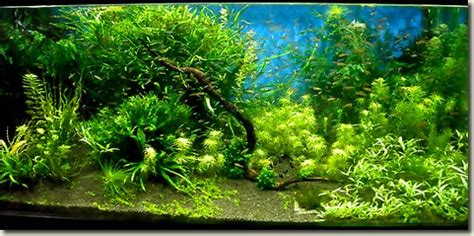 comment decorer aquarium