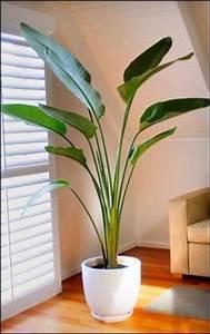 Best Indoor Palm Trees | ... indoor plants suitable for ...