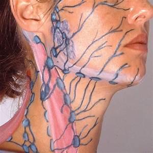 Manual Lymphatic Drainage  Dr Vodder    Body  U0026 Skin Care