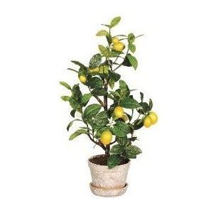 pot for lemon tree lemon tree in wood pot 25 quot target polyvore