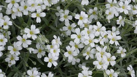 Weiß Blühende Stauden by Die Farbe Wei 223 Im Garten Es Leuchtet Im Dunklen