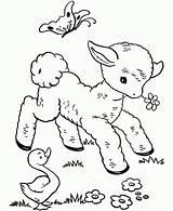 Sheep Coloring Printable sketch template