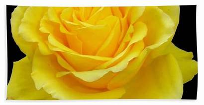 Yellow Rose Acrylic Flower Bath Taiche Towel