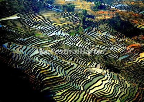 yuanyang rice terraces yuanyang laohuzui rice terraces yuanyang rice terraces