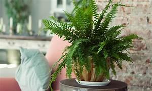 Welche Pflanzen Fürs Schlafzimmer : 10 zimmerpflanzen die wenig licht brauchen das haus ~ Frokenaadalensverden.com Haus und Dekorationen