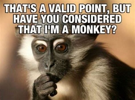 Funny Monkey Meme - funny monkey meme www pixshark com images galleries with a bite