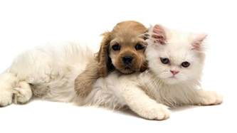cats and dogs wallpapers animals wiki