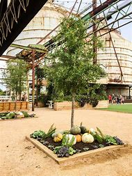 Magnolia Design Waco Texas
