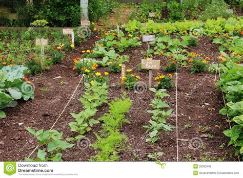 vegetable garden royalty free stock image image 26302486