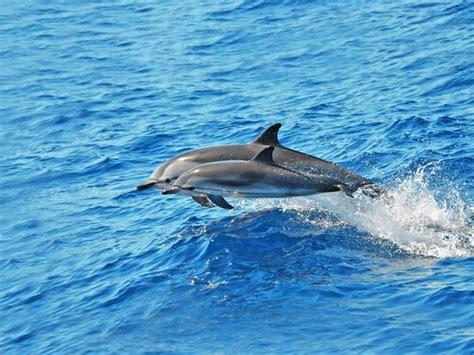 Catamaran Excursion Gran Canaria by Supercat Catamaran Canary Boat Trips Dolphin Excursion