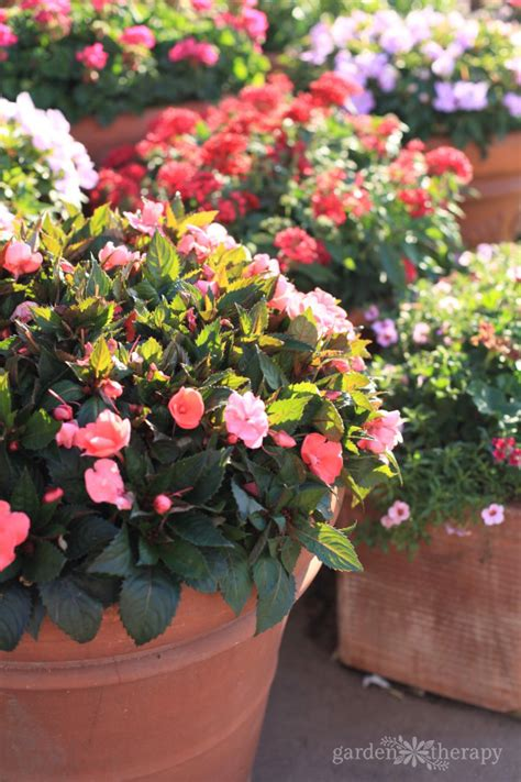The Secrets To Successful Container Gardening