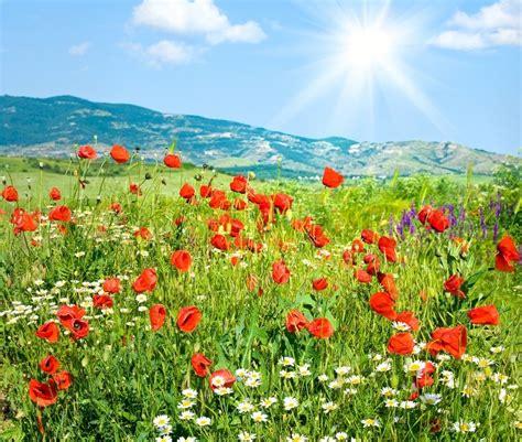 schoene sommer berglandschaft mit roten stockfoto