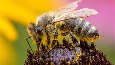 Der Eigene Garten Als Quelle Fuer Die Selbstverwirklichung by Bienen Im Eigenen Garten Sch 252 Tzen Mit Diesen Blumen