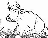Cow Coloring Pages Cows Printable Cool2bkids Printables Drawing Print Sheets Cute Realistic Animals Line Stencils Moose Stenciling Sketches Templates Cartoon sketch template