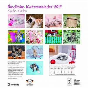 Calendrier Photo Mural : calendrier mural 2019 chaton ~ Nature-et-papiers.com Idées de Décoration