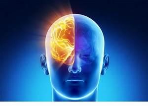Hay dos cerebros en cada cabeza vida lucida for Hay dos cerebros en cada cabeza