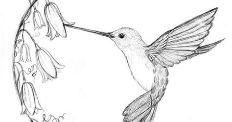 image result  sketches  hummingbirds  flowers