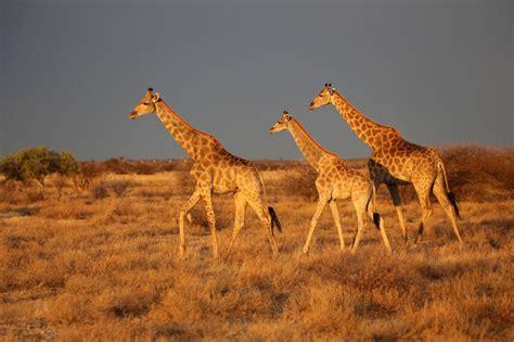 botswana simbabwe wildnis  perfektion reise