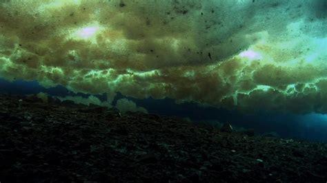 world antarctica documentary encounters