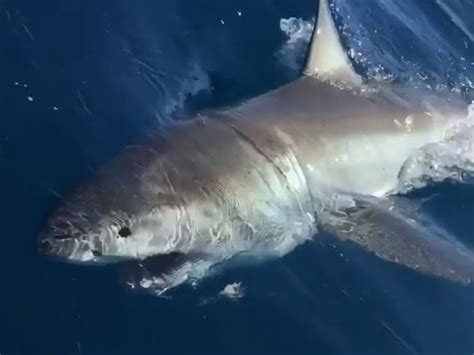 sentinel shark fishing hum sun orlando florida