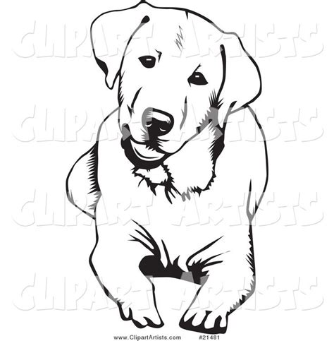 labrador coloring pages google search cut files