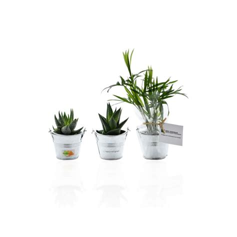 plantes de bureau plante publicitaire mini plante dépolluante de bureau