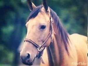 Schöne Bilder Kaufen : ein paar sch ne pferde bilder youtube ~ Orissabook.com Haus und Dekorationen