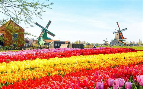 Keukenhof Flower And Tulip Festival 2019