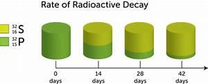 Radioactive Half