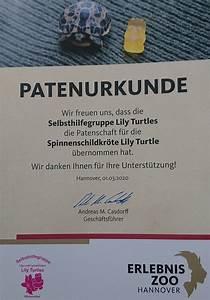 Ambiente Winsen Aller : selbsthilfegruppe lily turtles home ~ Watch28wear.com Haus und Dekorationen