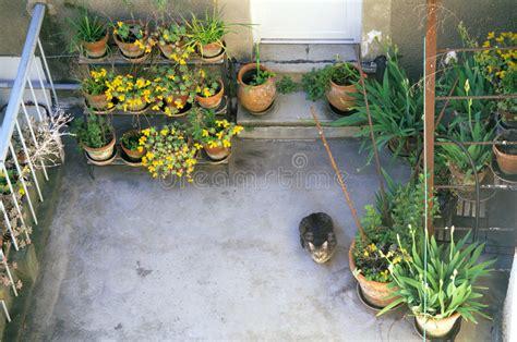 terrazzo fiorito terrazzo fiorito con il gatto curioso immagine stock