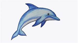 How to draw Dolphin step by step - YouTube