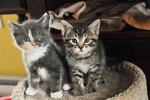 Que Donner A Manger A Un Ecureuil Sauvage : la recette pour chat de la semaine comment r aliser du ~ Dallasstarsshop.com Idées de Décoration