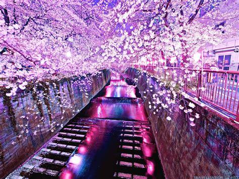 nicest time   year  flourishing  cherries