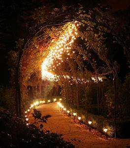 Fantasy images Forest of Lights wallpaper and background