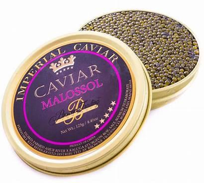 Caviar Imperial Malossol Gold Sturgeon Hybrid Fish