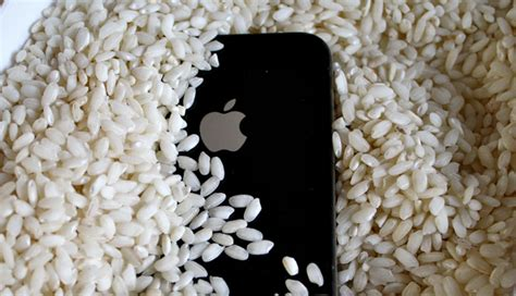 how to keep iphone in rice how to save an iphone 6 6plus from water damage
