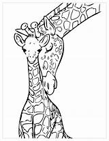 Coloring Giraffes Children Pages Funny Animals sketch template