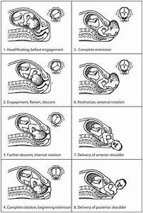 165 Best Images About Anatomie On Pinterest