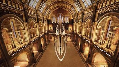 Museum London History Bing Natural Whale Skeleton