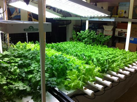 Indoor Gardening : Want A Garden? Space Is No Longer An Issue