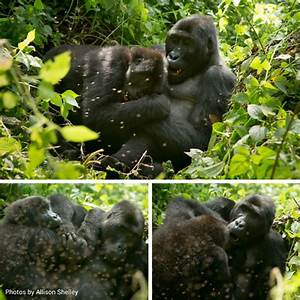 The Chimanuka Group - Wild Earth Allies