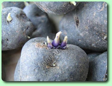 le calendrier mensuel du jardinier fairesonjardin fr