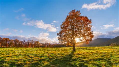 landscape trees field wallpapers hd desktop  mobile backgrounds
