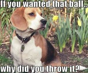Funny Animals Are Even Funnier With These Captions (27 Pics)