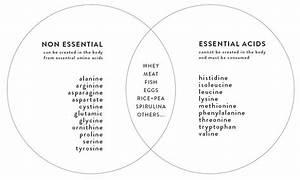 The 9 Essential Amino Acids